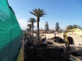 sdc10417-newcastle-gov-project-11-11-11-reinstate-palms-to-project-site
