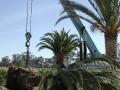 date-4mt-cranehome