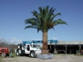 dscn0285-palm-4mt-vertle-removal