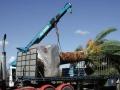 dscn0288-palm-on-truck3