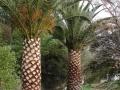 dscn0302-palm-ready-to-move