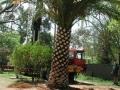 dscn0304-palm-removal2