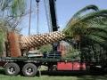 dscn0308-palm-on-truck1