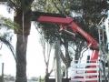 dscn1405date4mt-cranelift