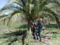 palm-world-work1