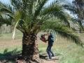 palm-world-work2