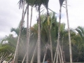 palms-5